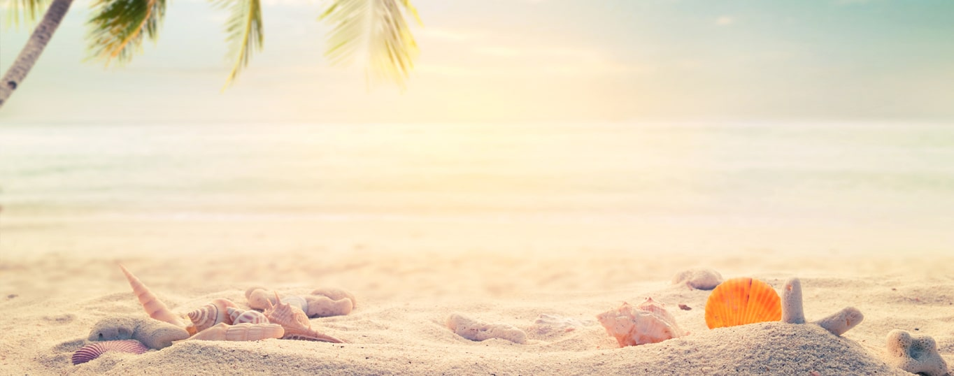 shells on the sea beach with coconut tree